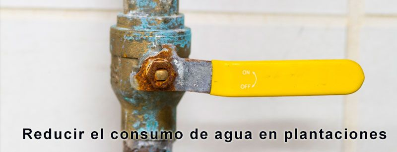 reducir consumo de agua en plantaciones