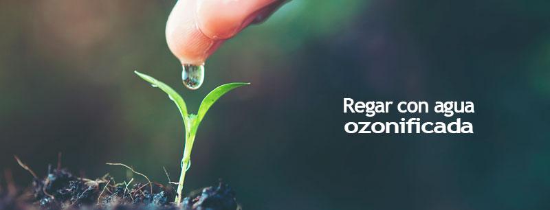regar con agua ozonificada